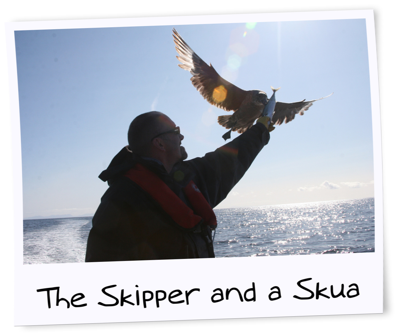 The skipper and a skua